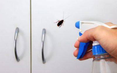 Cómo controlar una plaga de cucarachas en tu piso
